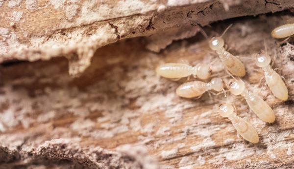 termites treatment